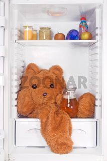 teddy bear in the refrigerator