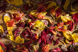 Verwelkte Blütenblätter im Sonnenlicht