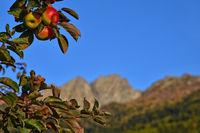 Äpfel in Südtirol