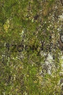 Baumrinde als Hintergrund