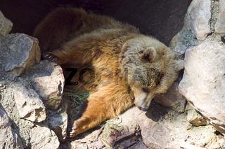 Schlafender Bär - sleeping Bear