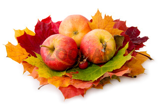 Autumn maple leaves and three apples.