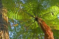 Whakarewarewa Forest, New Zealand