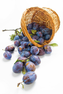 Plums and a wicker basket
