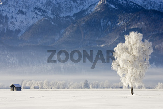 frostiger, nebliger Sonnenaufgang am Alpenrand, Kochelsee, Bayern Starker Raureif in den Baeumen, frosty and foggy sunrise in the bavarian alps, Hoarfrost in the trees