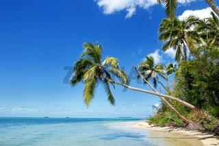 Shore of Makaha'a island near Tongatapu island in Tonga