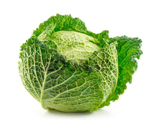 Ripe Savoy Cabbage Isolated on White