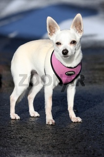 Hund - Gina