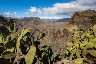 View of the mountain landscape from viewpoint Degollada de Las Yeguas. Cactus in the foreground. Gran Canaria in Spain.