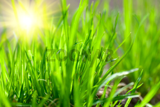 green grass in sunny weather