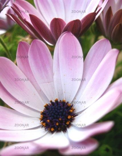 Blumezeit