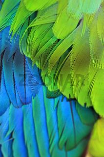 Bird Plumage feathers