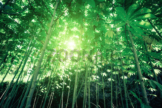Sunny day in fantasy tropical forest