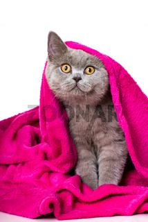 Katze mit Kuscheldecke