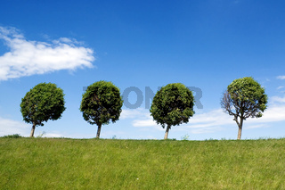 Four trees in a line