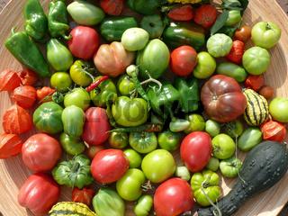 Solanum esculentum, Tomaten, tomatos