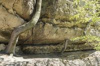 Buchen mit Sandsteinfelsen, Boehmische Schweiz