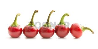 Round chili peppers.