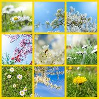 zusammenstellung von verschiedenen fruehlingsblumen