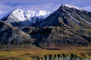 Mount Eielson und herbstliche Tundralandschaft / Denali Nationalpark