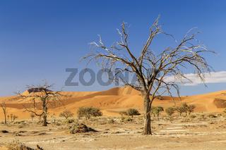 Tote Bäume und Sanddünen in Sossusvlei, Namibia