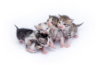 Cute kittens playing on white background