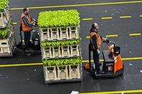 Kleinsttransporter zieht Wagen mit Kisten versandfertiger Pflanzen und Blumen, Niederlande