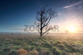 misty sunrise over marsh and dead tree