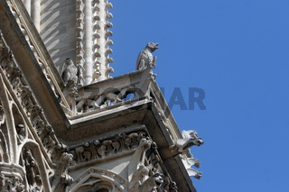 The Gargoyles of Notre Dame Cathedral, Paris