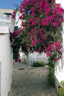 Blütenpracht, Portugal