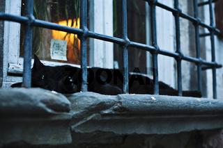 schwarze Katze auf einem Festerbrett / black cat on a window board