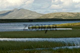 Sumpfige Hochebene am Dovrefjell, Norwegen