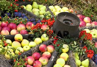 Altes Wagenrad mit Äpfeln