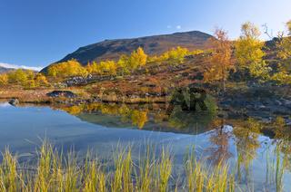 herbstlich bunte Birken spiegeln sich in einem See im Kaitumdalen, Sjaunja Naturreservat, Welterbe Laponia, Lappland, Schweden