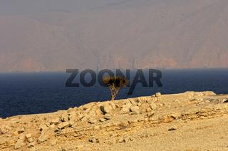 Küstenlandschaft am Persischen Golf, Oman