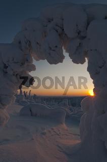 verschneite Fichte, Stubba Naturreservat, Welterbe Laponia, Lappland, Schweden