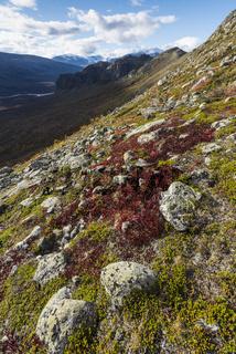 Herbst im Rapdalen, Lappland