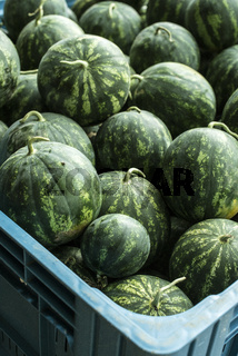 Watermelons in a a large crate