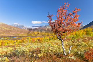 Herbst im Kaitumdalen, Sjaunja Naturreservat, Welterbe Laponia, Lappland, Schweden