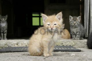 Kleine junge Katze auf einem Bauernhof
