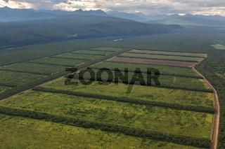 Fields of the Yelizovsky District in Kamchatka Peninsula.
