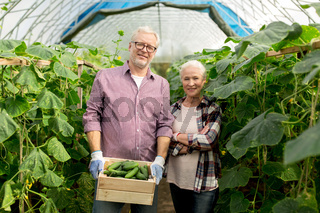 senior couple with box of cucumbers on farm