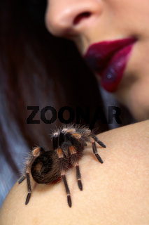 spider Brachypelma smithi on girl's shoulder