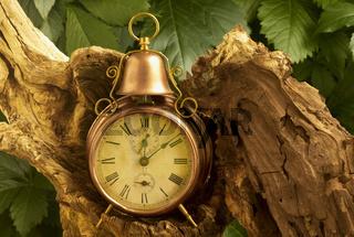Alte Uhr mit Wurzel