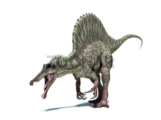 Spinosaurus dinosaur. Isolated on white, clipping path included.