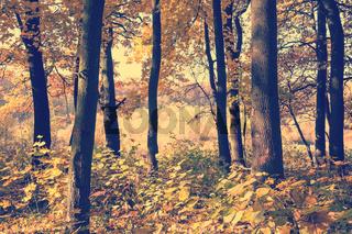 Fall park landscape