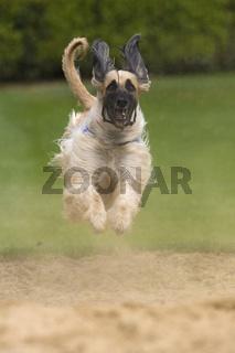 fliegender Windhund