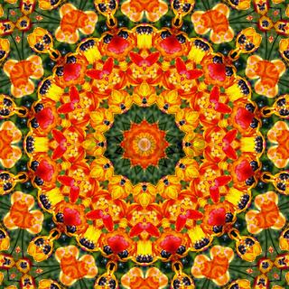 Blüten Mandala 09