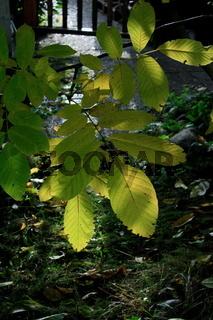 Herbstblätter vor einem Weg