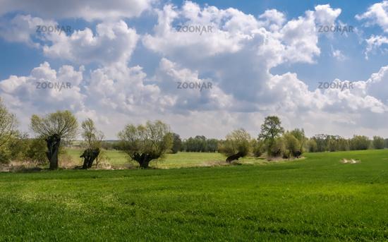 Wiesenlandschaft mit Bäumen in der Uckermark bei Zollchow